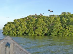 Mida Creek Mangroves