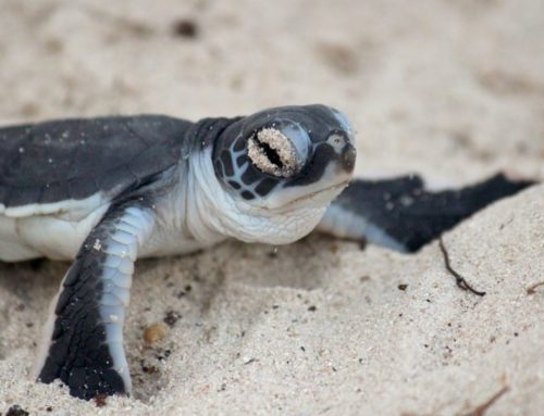 Now You Sea – Protecting Sea Turtle Mothers & Their Babies