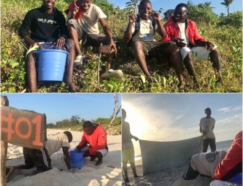 First turtle nest in Watamu for 2020 – an Olive Ridley!